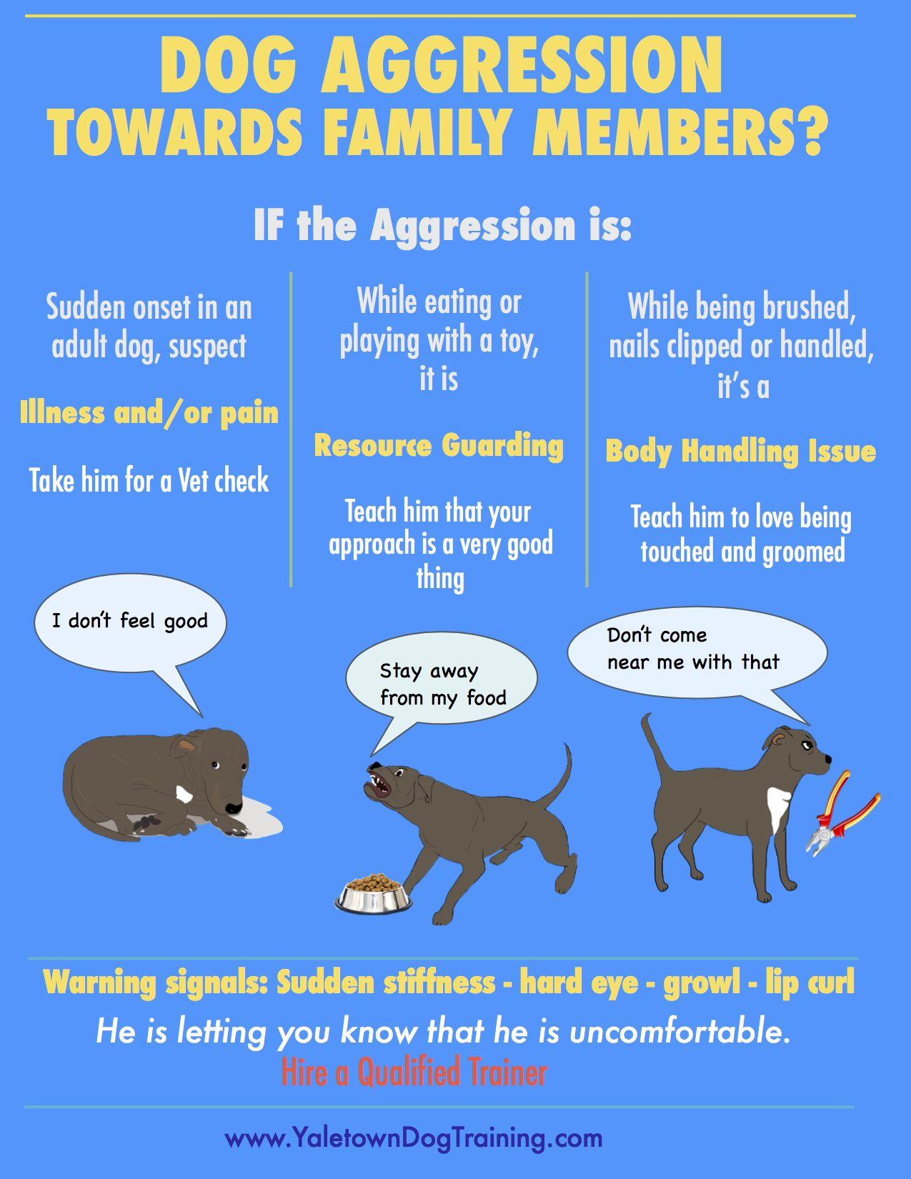 Causes Of Aggression To Family Aggressive Dog Aggressive Dog