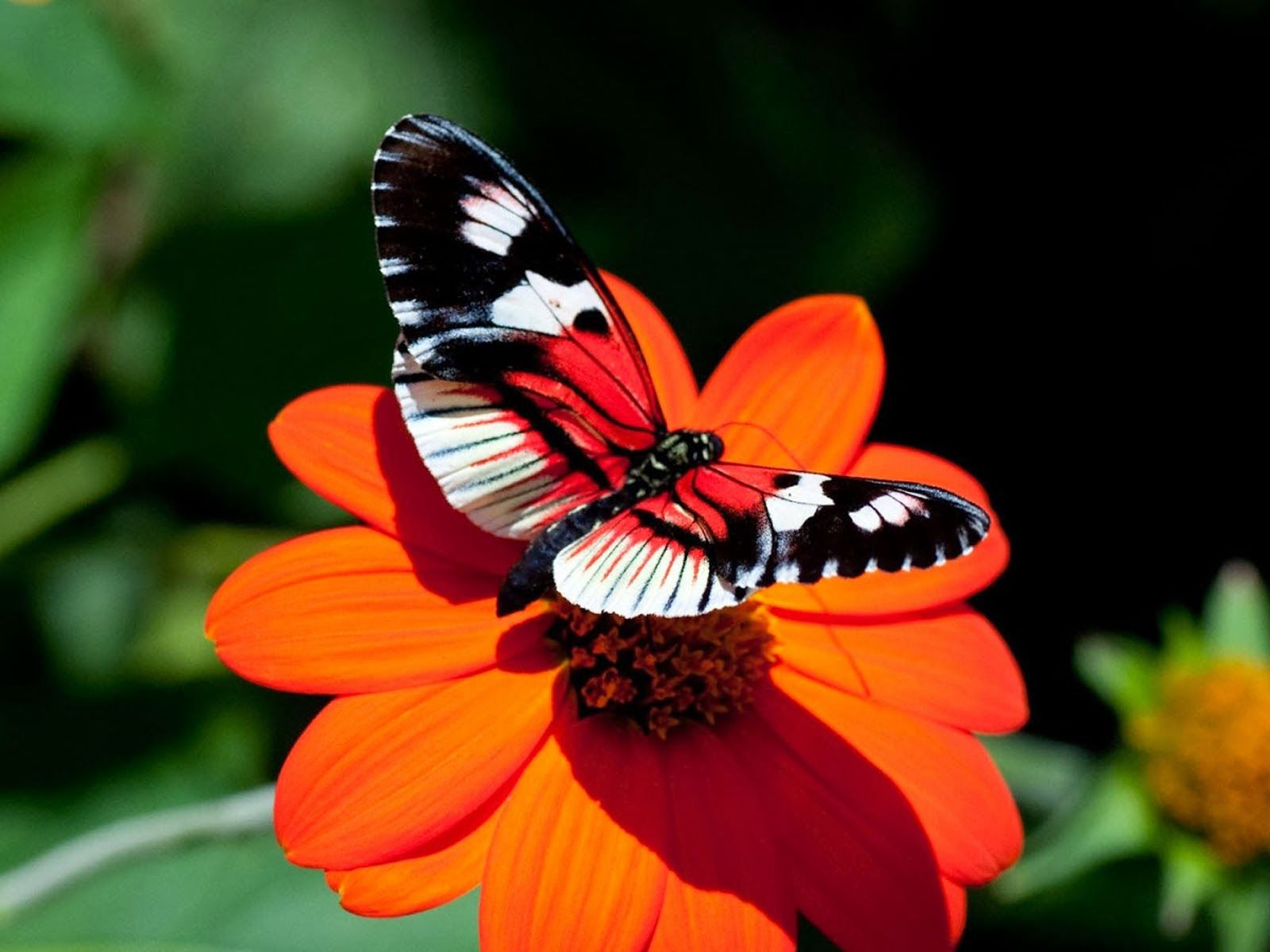 tag butterfly desktop backgrounds wallpapers photosimages and