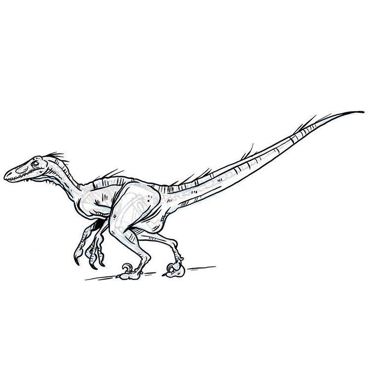 Velociraptor Skeletal Reference Sketch Velociraptor Raptor