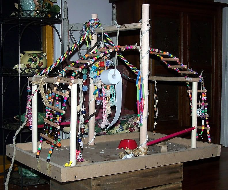 Home made toys for parrots play gym and