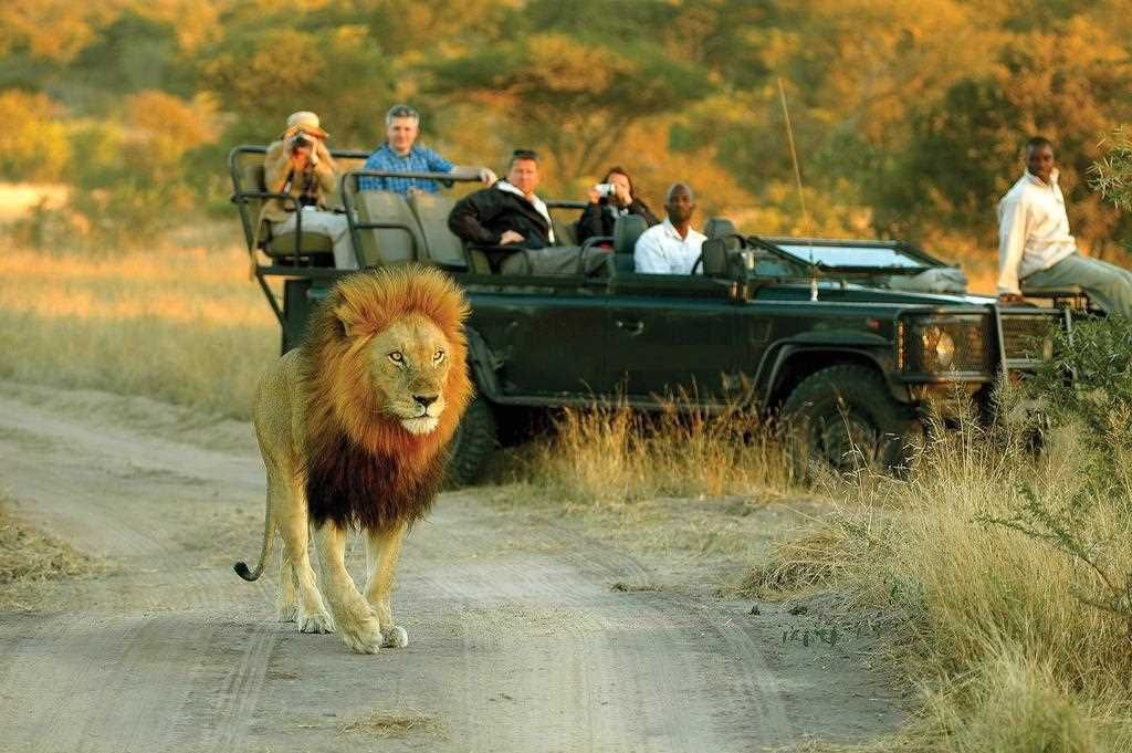 Best Safari Specialists Extraordinaire South africa