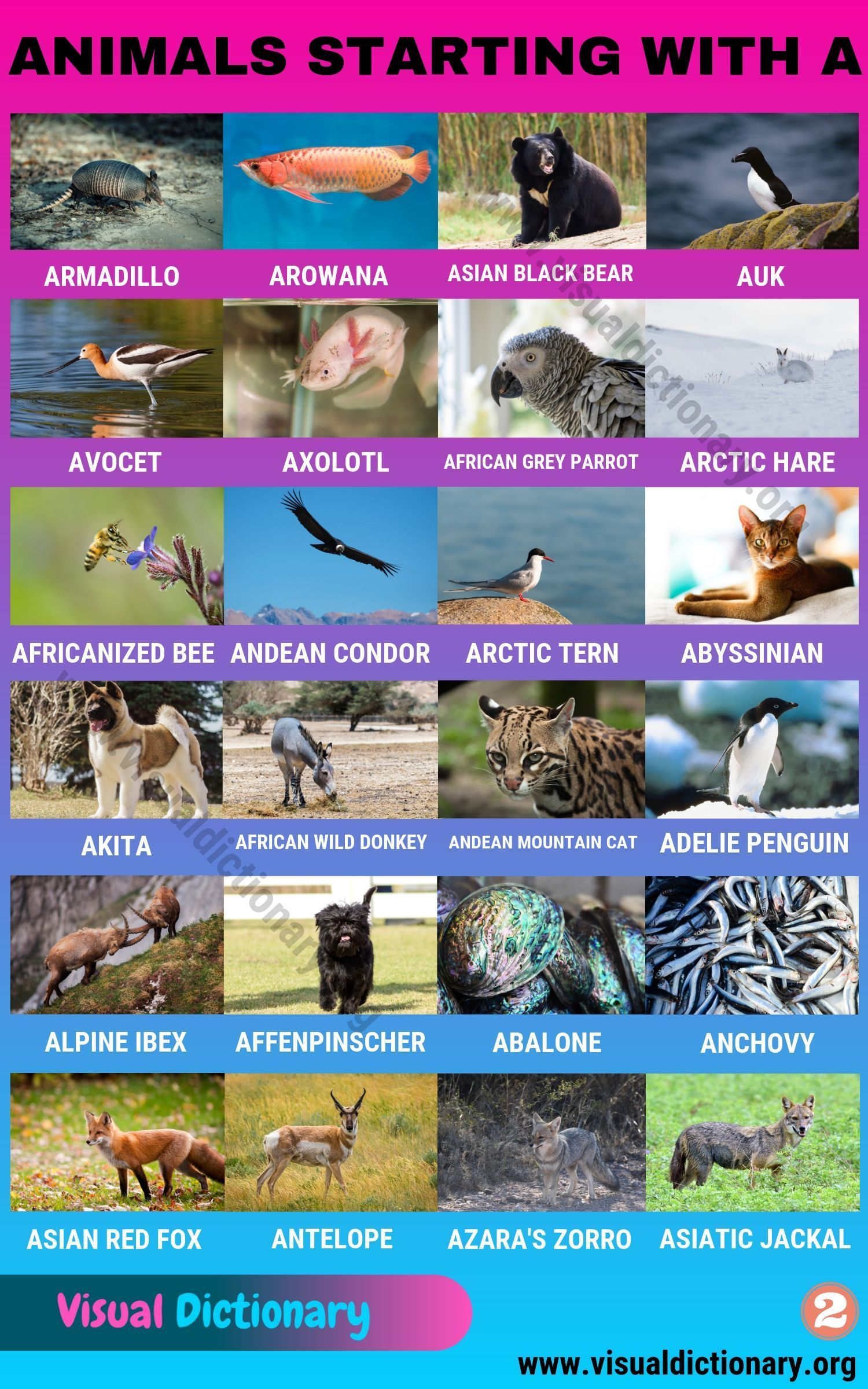 Pin On Visual Dictionary
