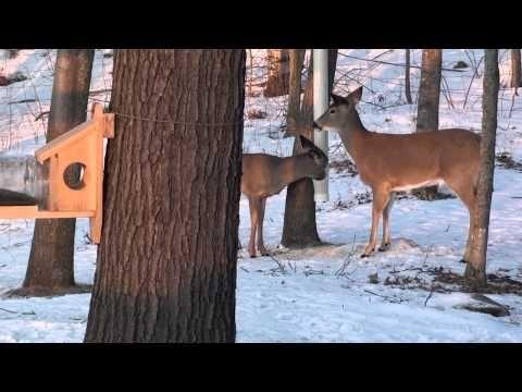 Pvc Feeder Plans We Use These As Deer Mineral Feeders