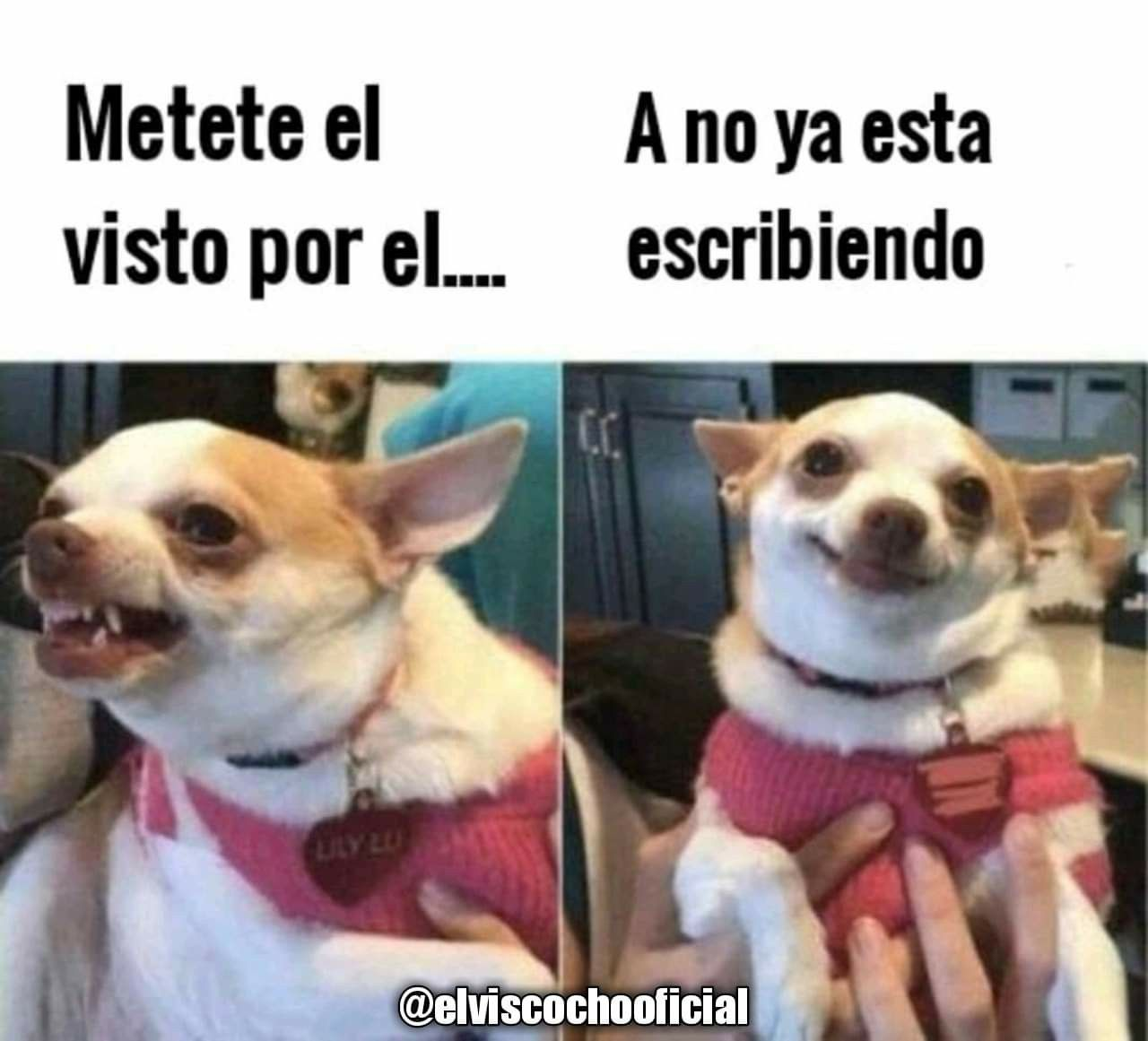 Pin By Dyazz On Mensajes Funny Memes Chihuahua Funny Animals