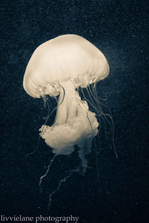 Nature photography - Intrigue - 11x14 fine art color photograph - nautical aquatic teal navy cerulean blue