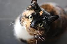Image result for foto's van katten en poezen
