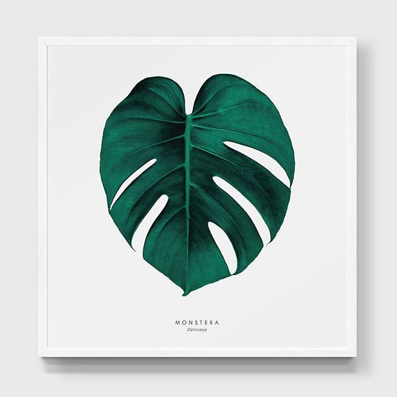Watercolor Green Plants Monstera Nature Posters And Prints: Monstera Print. Swiss Cheese Plant Poster. Tropical Leaf