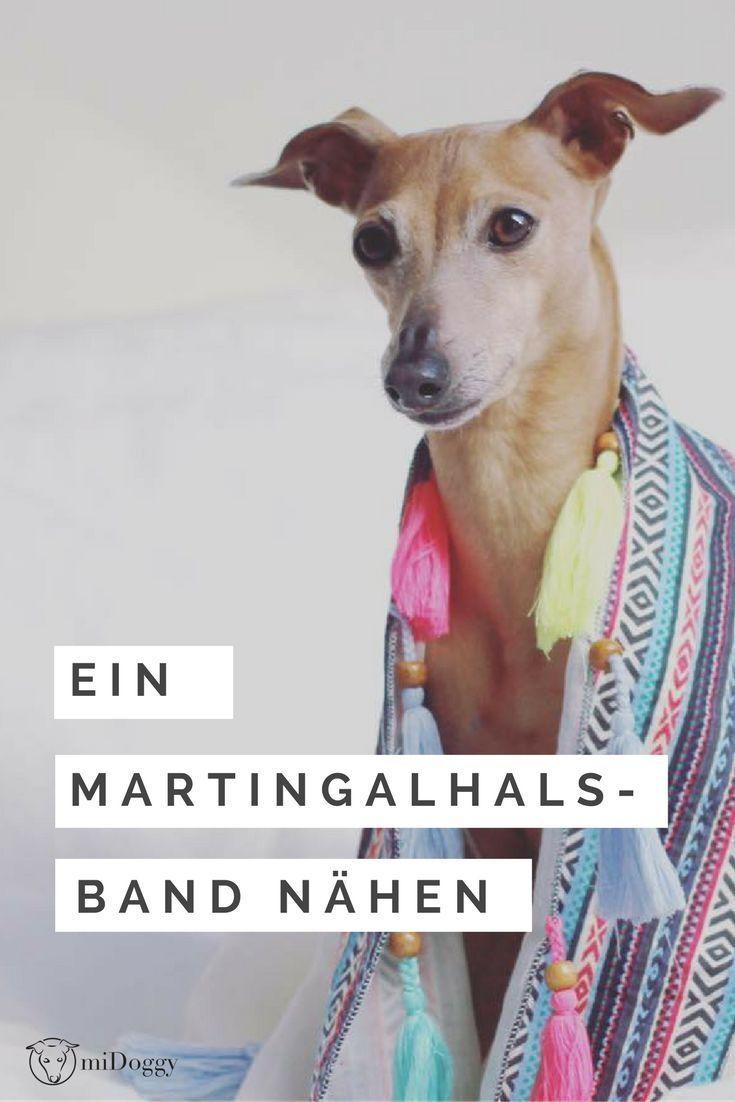 Martingalhalsband Selbernähen | Selber nähen, Halsband und Hund katze