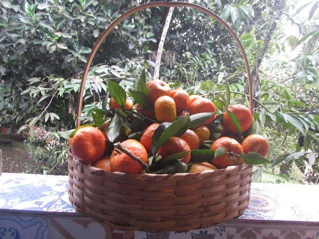 Recanto Canaã: Frio + Vitamina C = Saúde
