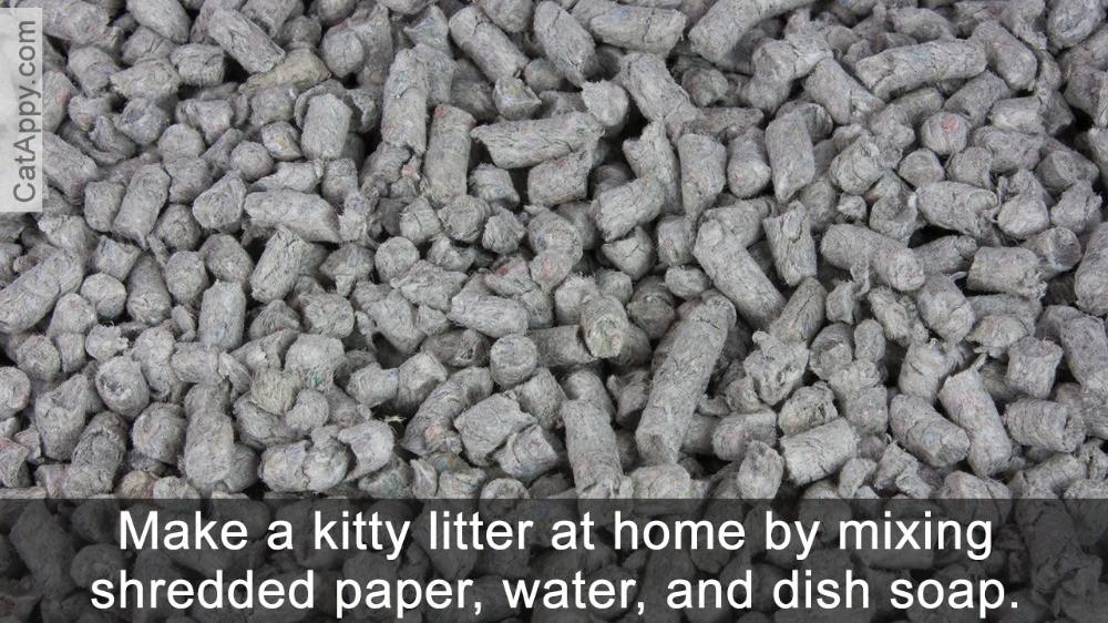 12 Alternatives to Clay Cat Litter You Didn't Know Cat