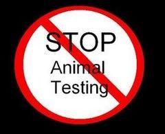 Stop animal testing | Animal Rights | Pinterest | Stop animal ...