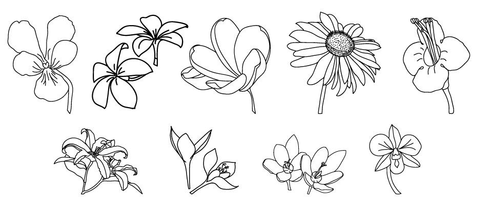 drawing different types of flowers