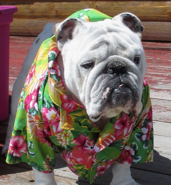 English Bulldog Hawaiian Shirt Hawaiin Dog Shirt Pet Clothes