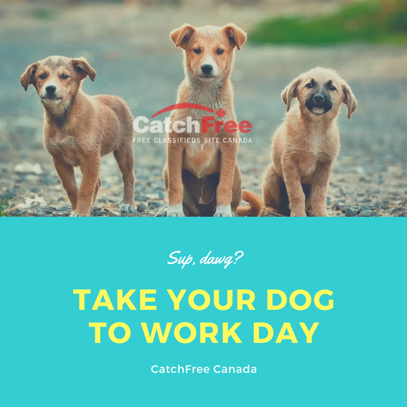 Catchfree is Canada's 1 Pets and Animal Portal, where you