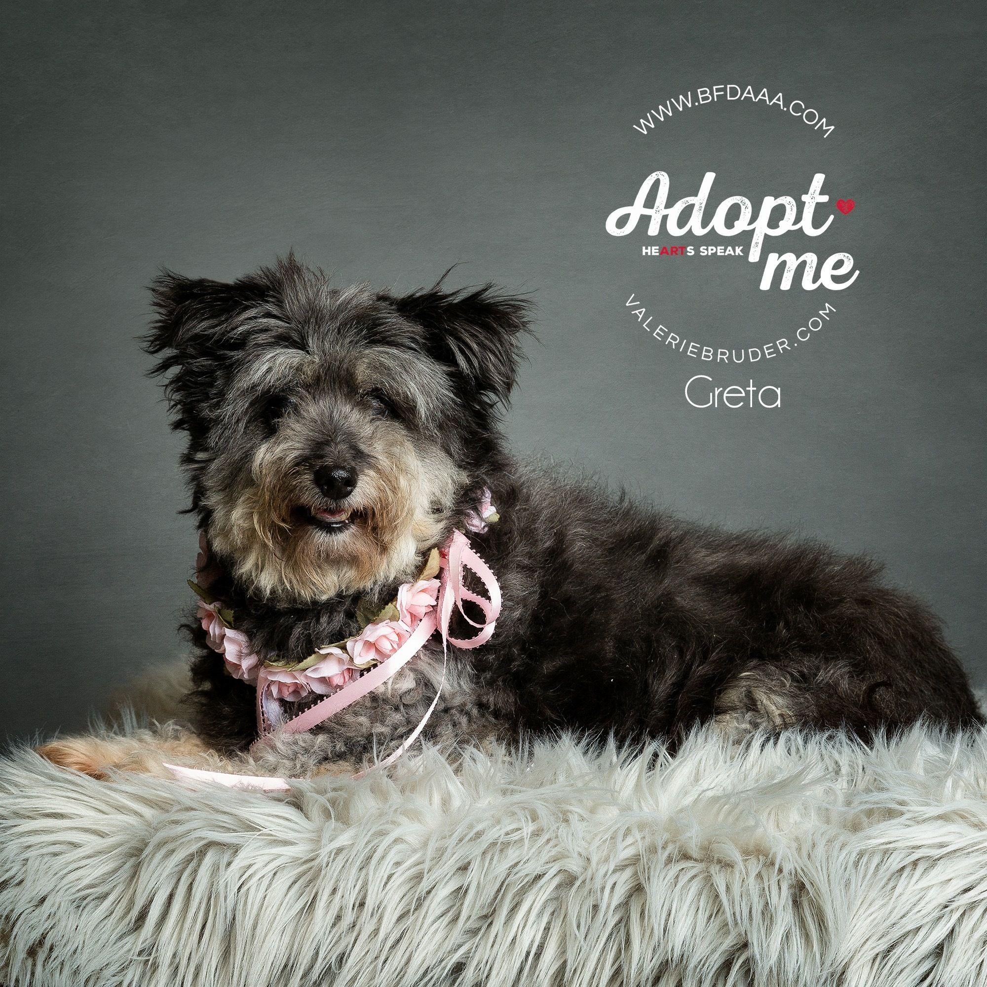 Adopt Greta On Cute Puppy Breeds Puppy Breeds Yorkie Puppy