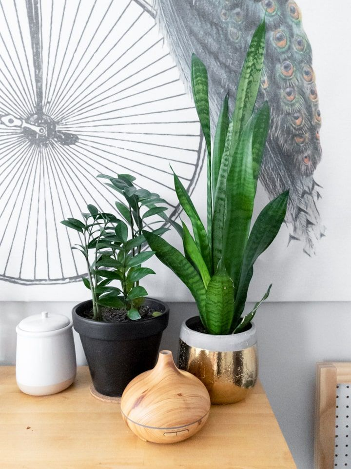 How to Care for the ZZ Plant in 2020 | Plants, Indoor ...