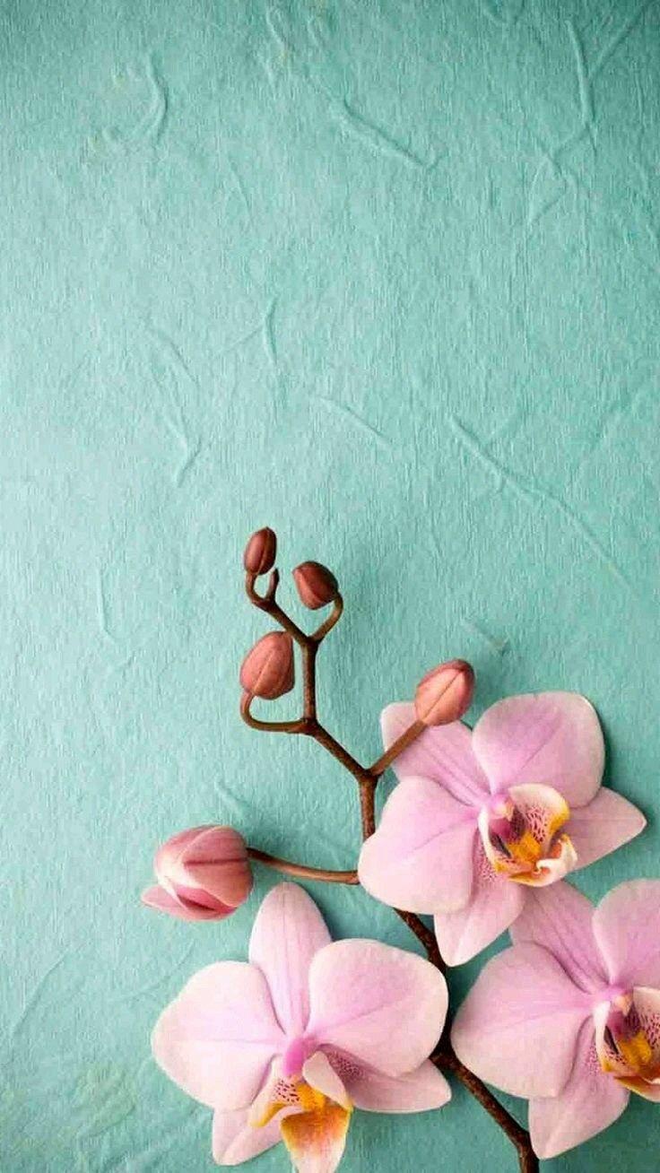 Orquidea Pink Orchid Wallpaper Pink Wallpaper Iphone Orchid Wallpaper