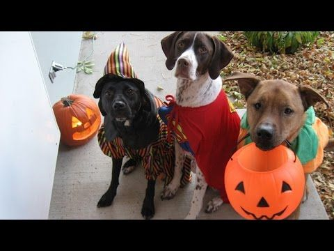 Cats And Dogs Wearing Halloween Costumes Funny And Cute Animal