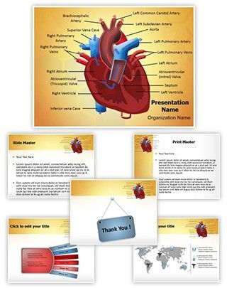 Heart Blood Circulation PowerPoint Presentation Template is one of - sample medical powerpoint template
