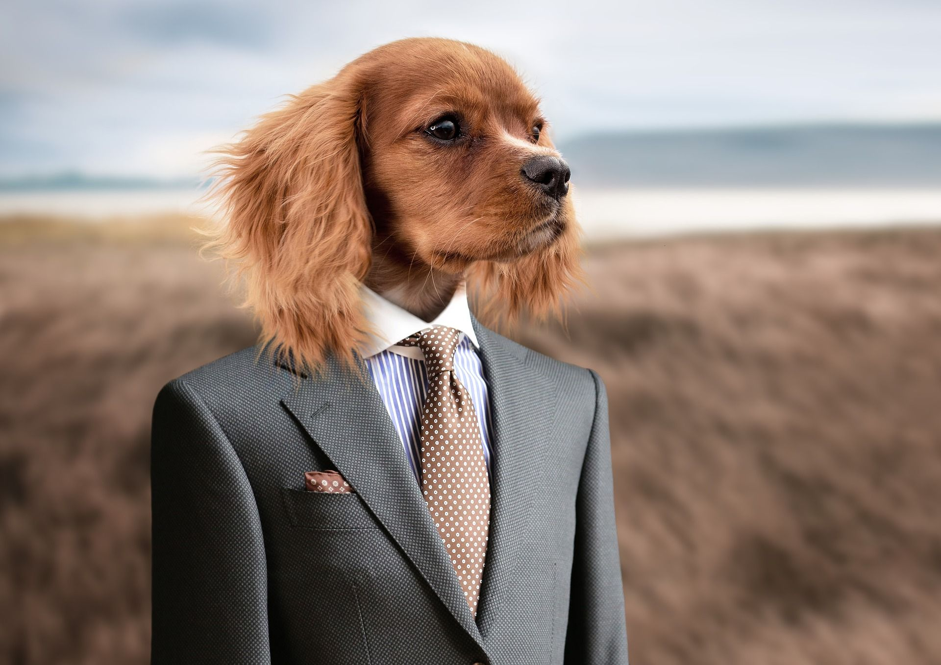 Pin By Kucni Ljubimci Tv On Kucni Ljubimci Tv Aggressive Dog