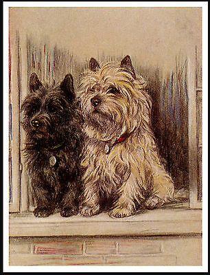 Cairn Terrier Ltd Ed Dog Print By E Groves Cairn Terrier