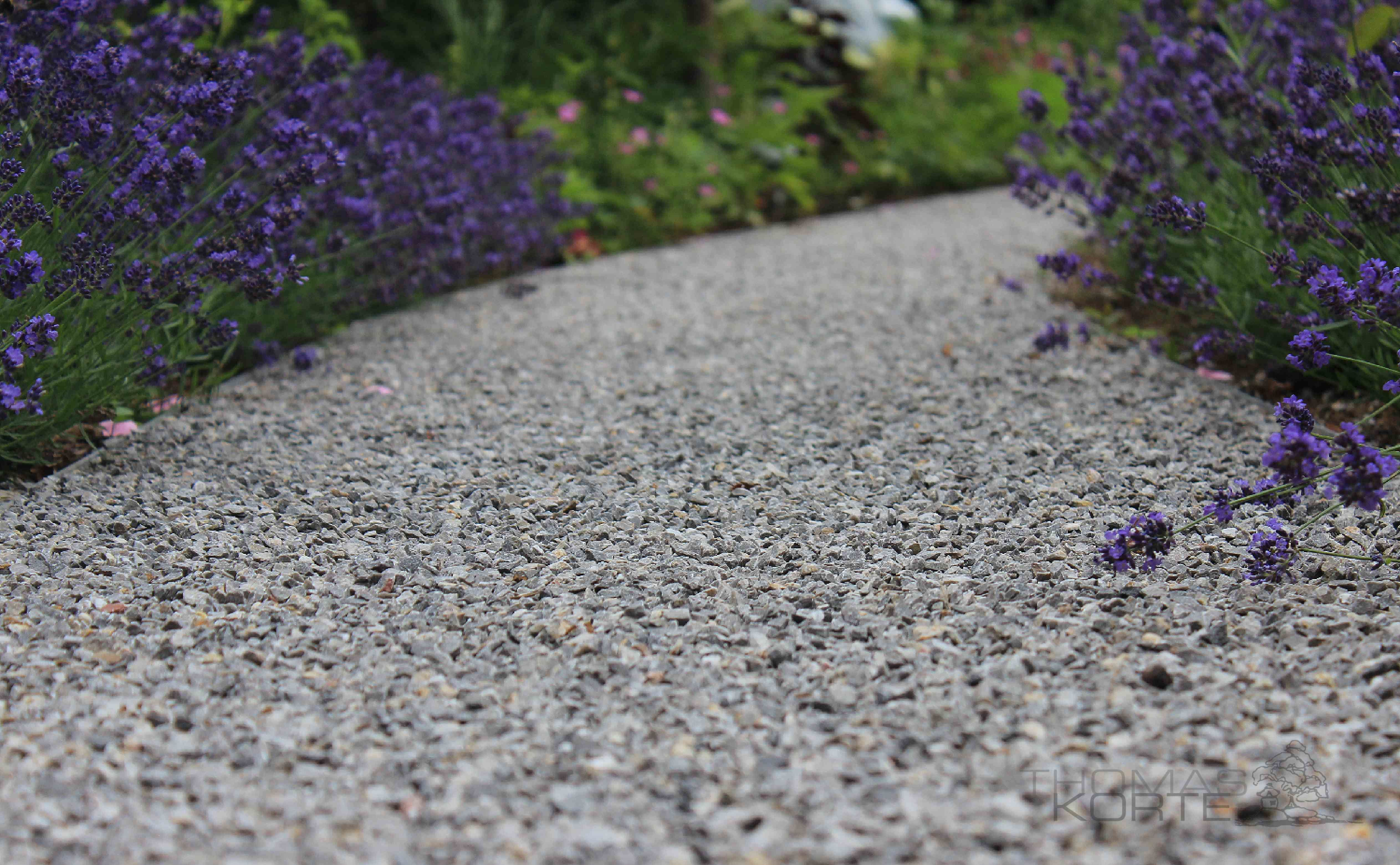 Der Weg Splitt Und Lavendel Garten Landschaftsbau Kiesgarten Landschaftsbau
