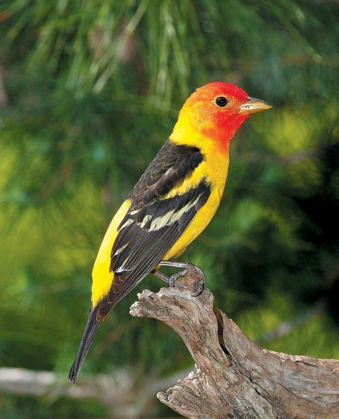 How To Attract Hummingbirds, Birds