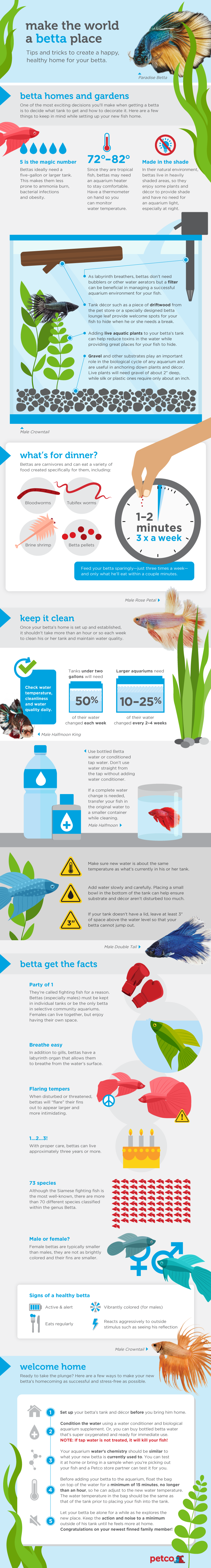 Fish tank you never have to clean - Better Betta Care For Happy Healthy Fish