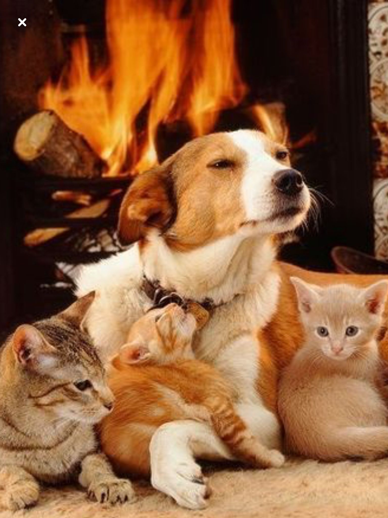 Amma Good Dog Cats And Kittens Cute Animals Animals Friends