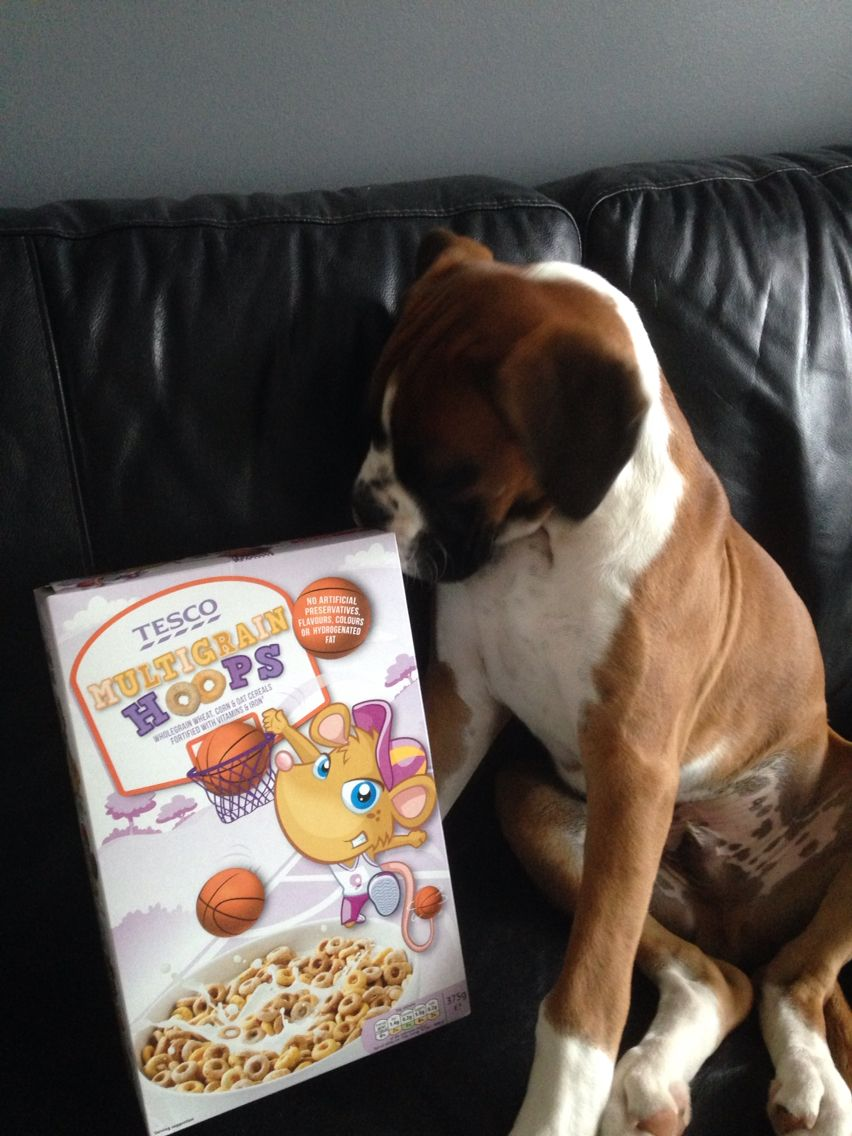 Love my breakfast!!! Boxer dogs, Pitbull puppies, Boxer