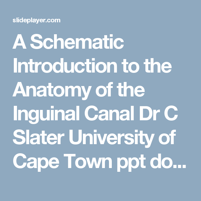 A Schematic Introduction To The Anatomy Of The Inguinal Canal Dr C