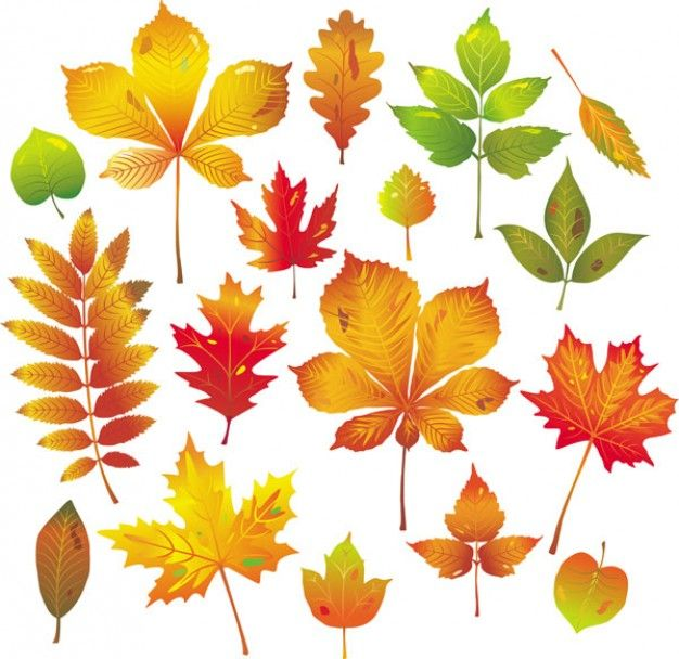 Autumn Leaf Drawing Google Search Leaf Drawing Leaves Vector