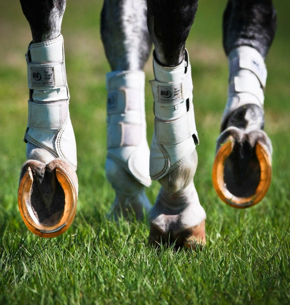 Check out the latest nonmetal horseshoes and boots from
