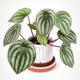 Zamowienie Zielony Parapet House Plants Indoor Plants House Plants