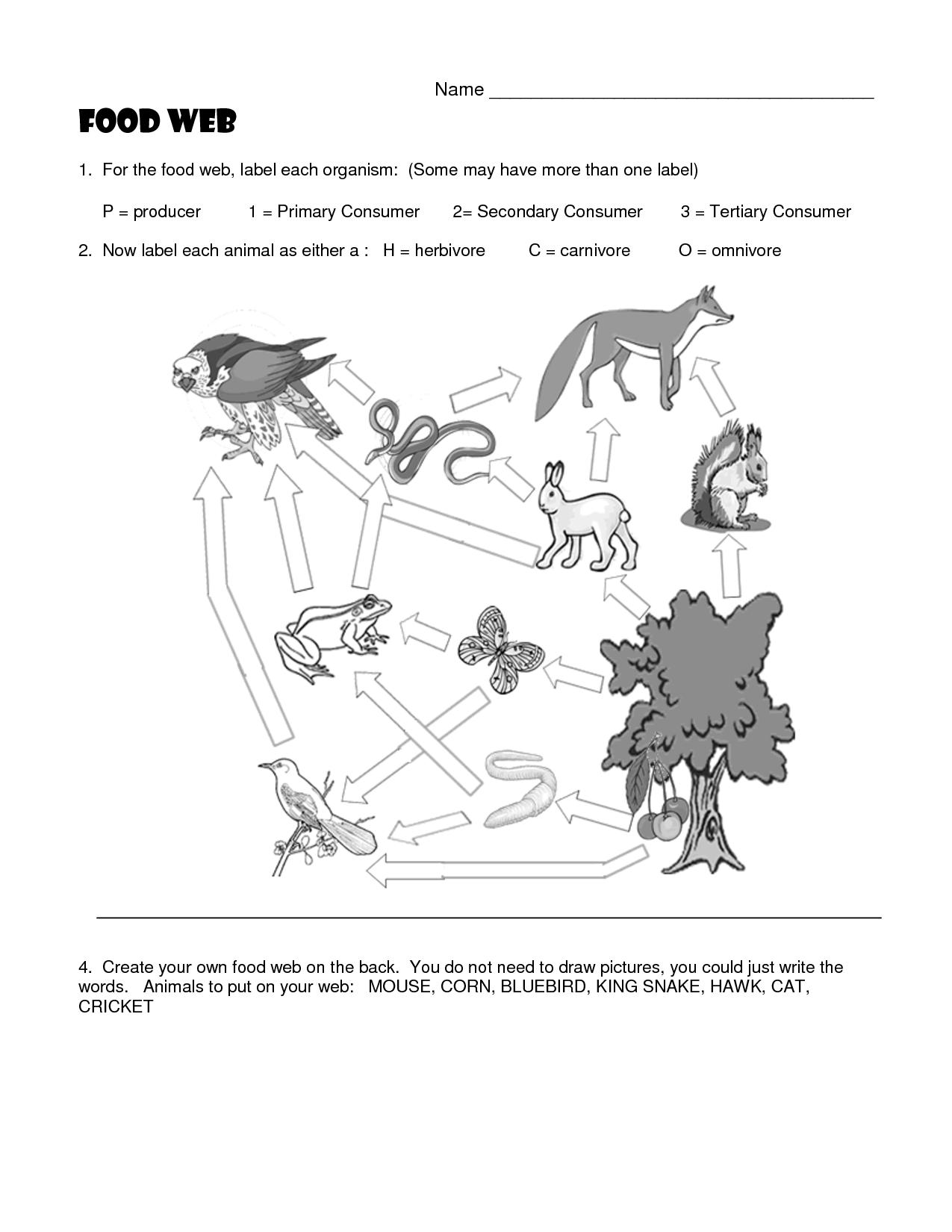 Worksheets Food Chain Worksheet pictures of omnivores carnivores and herbivores food web worksheets