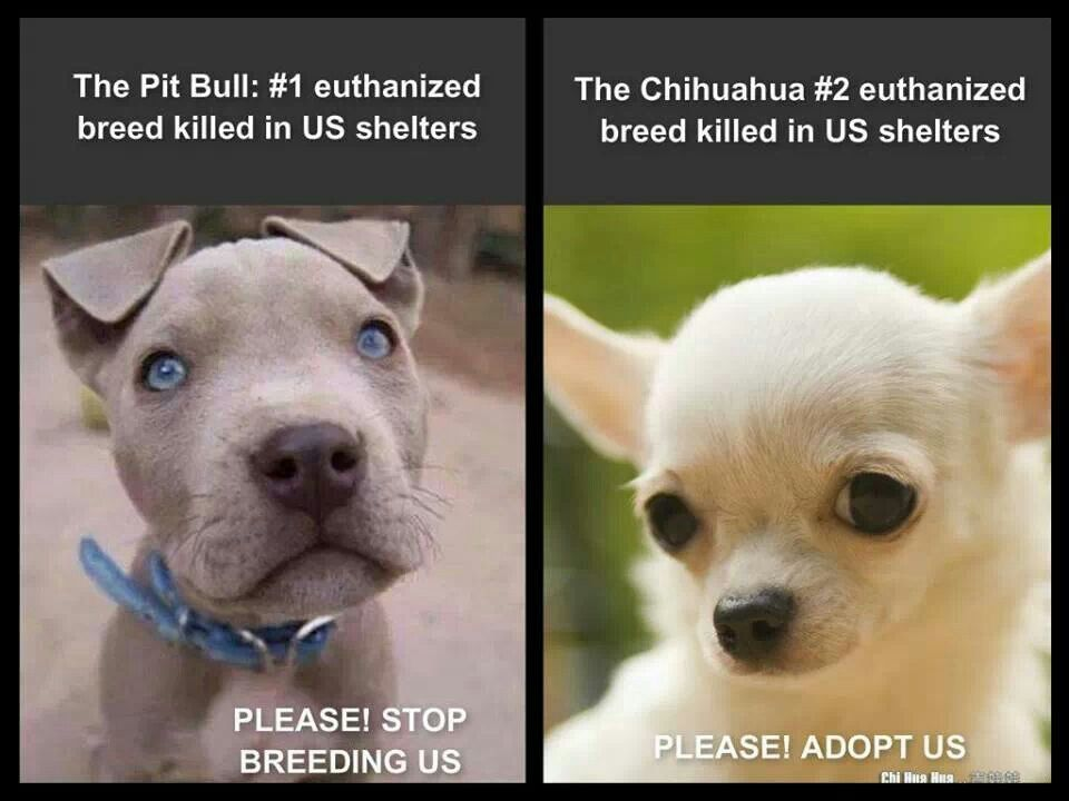 Pittie Luv (With images) Animal shelters near me, Animal