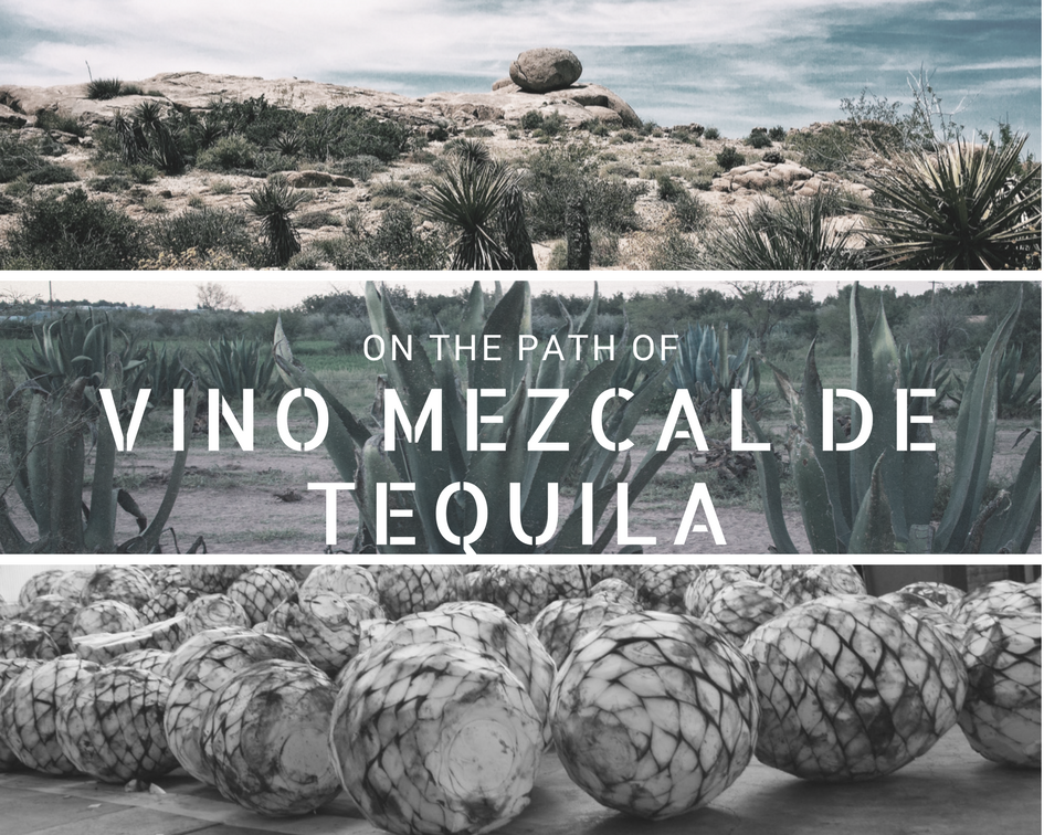 On the path of vino mezcal de tequila