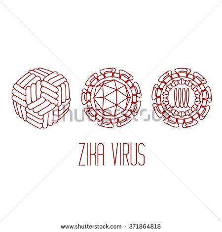 Zika virus structure | Zika Virus | Pinterest | Zika virus ...