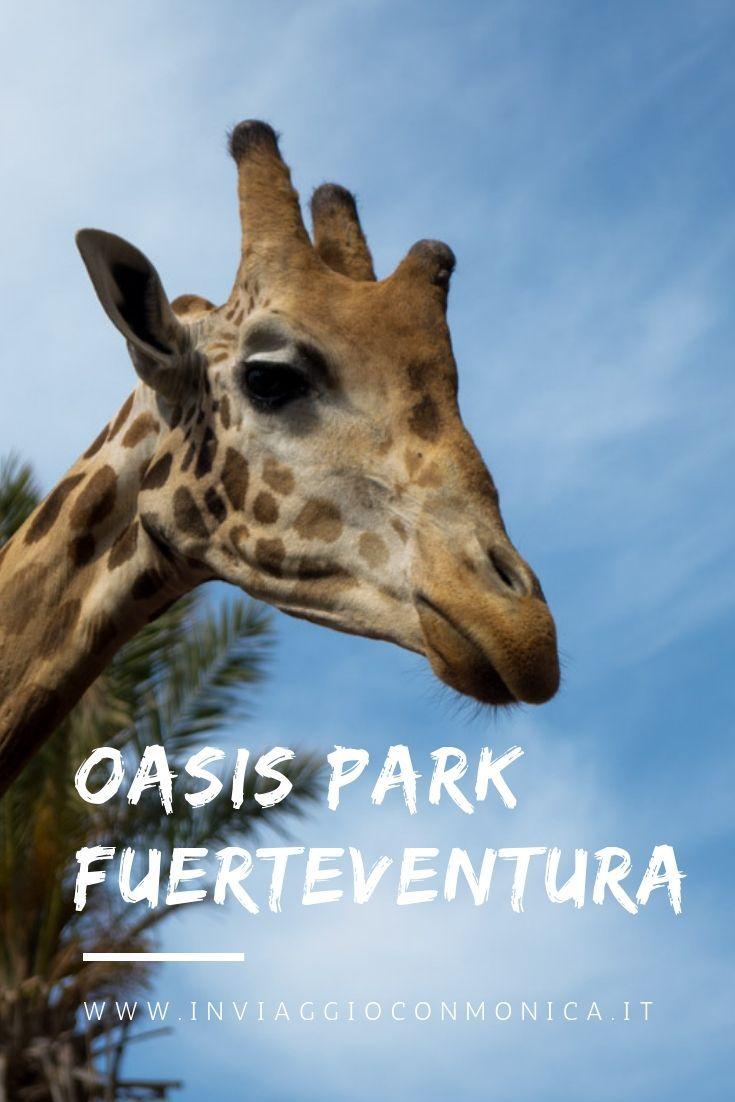 Tra le cose da vedere e da fare a Fuerteventura c'è l