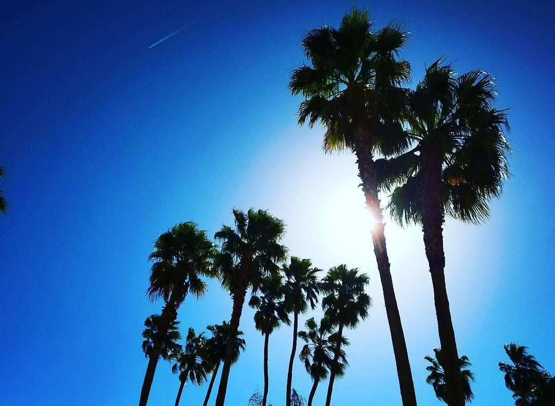 palm trees in the sun las vegas nv palmtrees sunshine sun