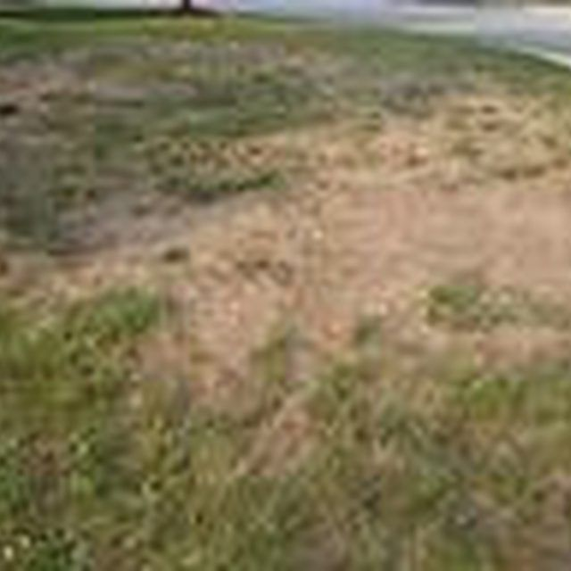 How To Repair And Reseed Dead Spots On Your Lawn Lawn Repair Dead Grass Lawn