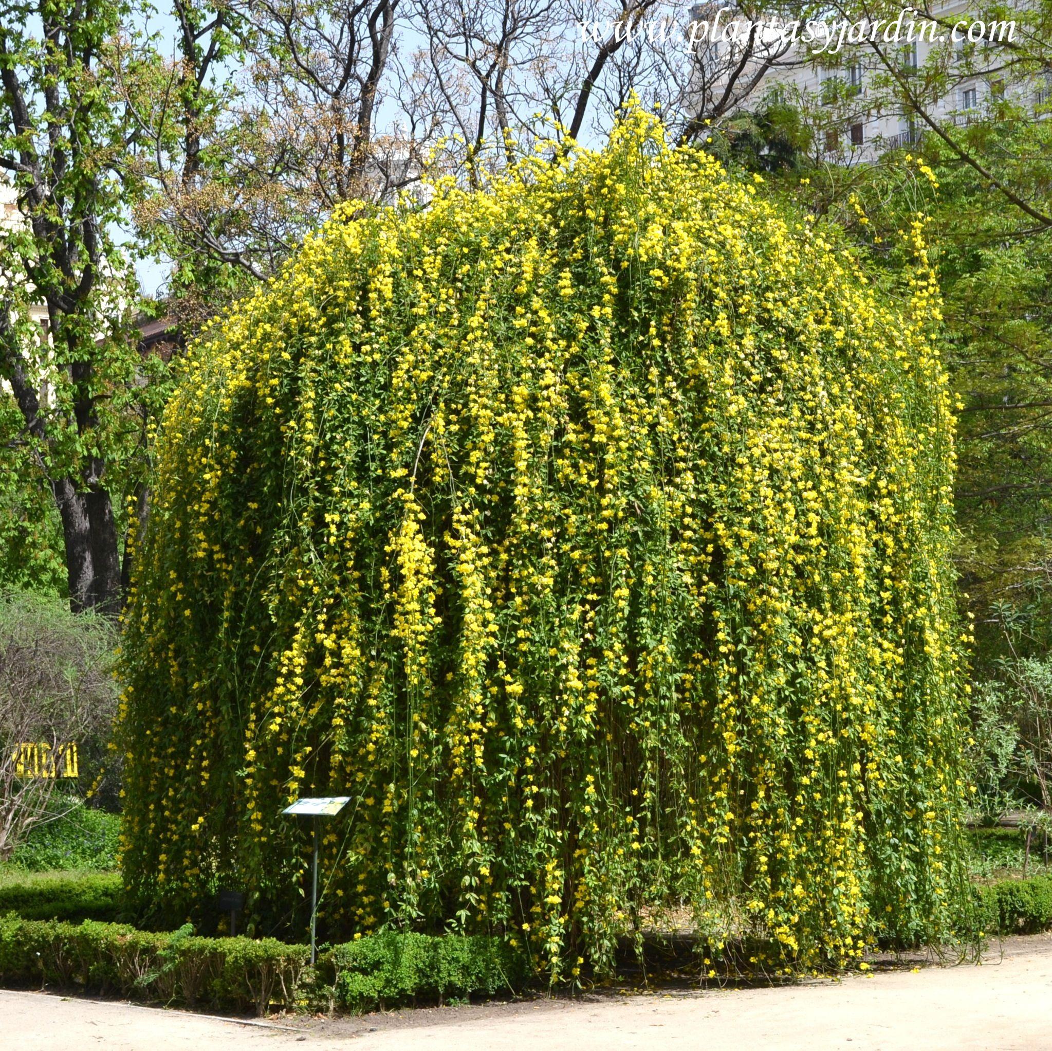 40+ Plantas arbustos exterior ideas in 2021