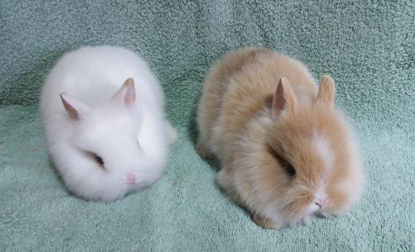 Kleintiere Kaufen Amp Verkaufen Baden Wurttemberg Haustier