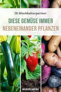 28 Gemüsearten und ihre wirksamsten Mischkultur-Partner + Beispielplan – Wurzelwerk