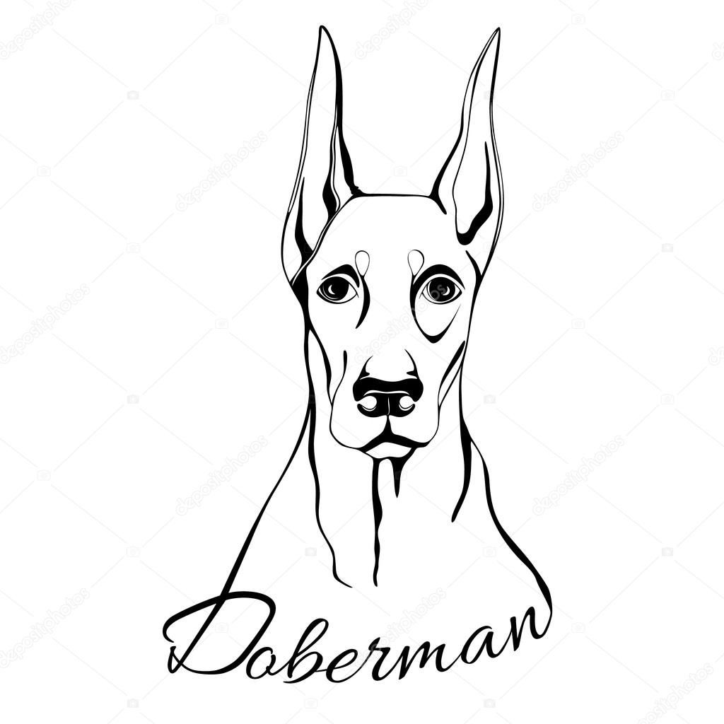 Download doberman dog head stock illustration 116778868