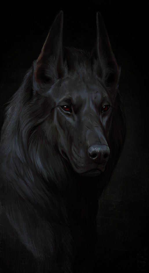 Epingle Par Thais Nna Sur Levrier Loup Garou Animal Fantastique Loup Noir