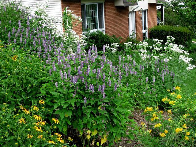 Native Plant Garden Magee Design By John Magee, Via Flickr