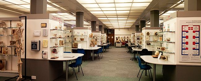 Wellcome Museum Of Anatomy And Pathology The Royal College Of