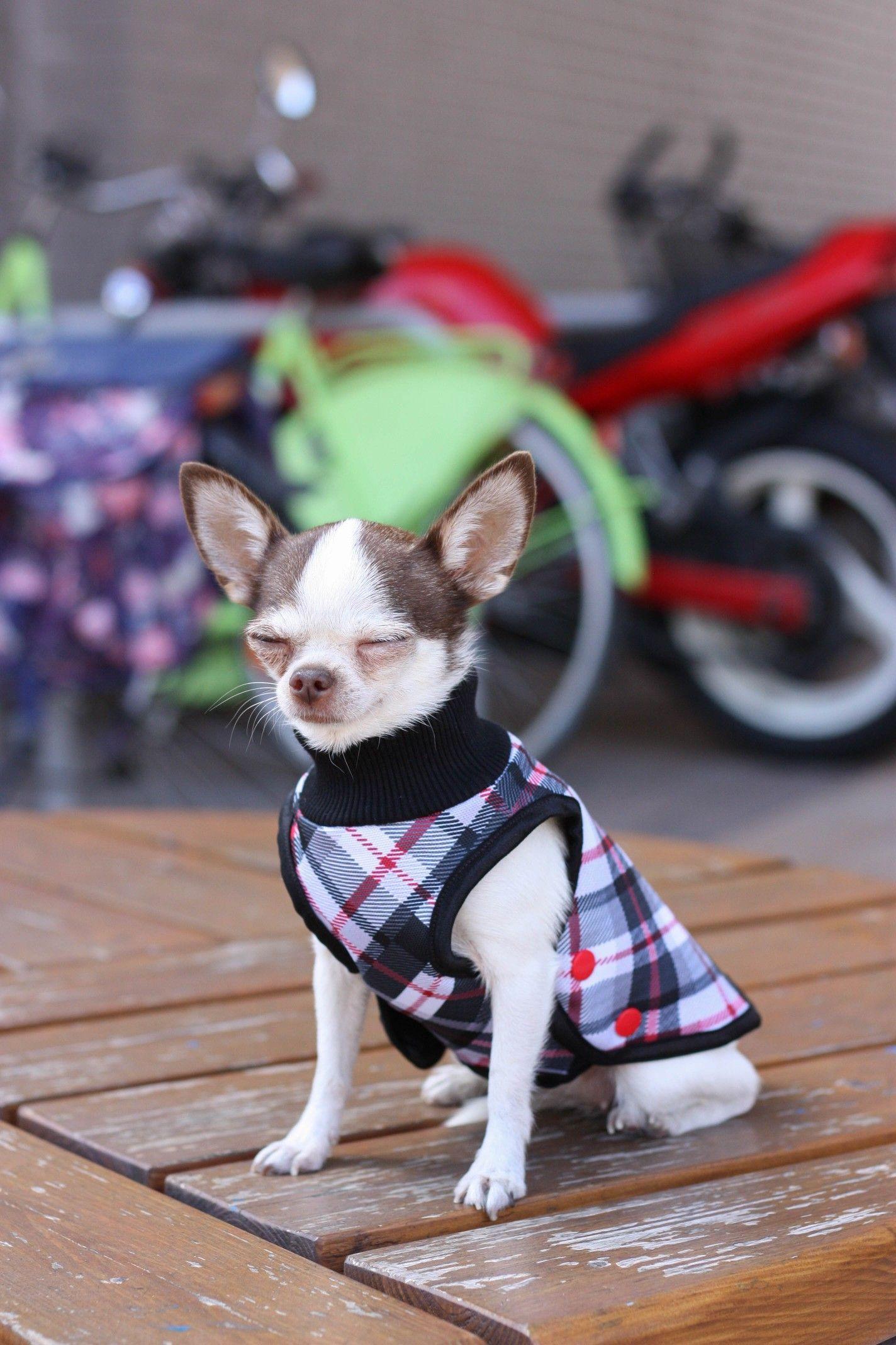 Cute Dog Dress Ruffle Crochet Dress For Pet Teacup Chihuahua