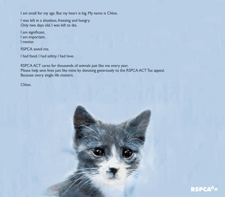 Pin by RSPCA ACT on Artwork, Appeals and Posters Artwork